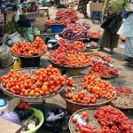 Consumer Watch: Basket of Tomatoes sells for N17,000   –  N19,000