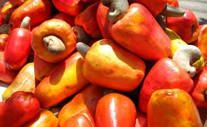 Nigeria's cashew output soars by 43%, market value 83%