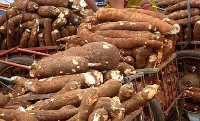 File photo: cassava tubers