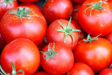 Dangote farms flags-off distribution of hybrid tomato seedlings to farmers in Kano