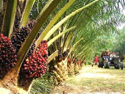 Nosak Group boosts Obaseki's industrialisation drive