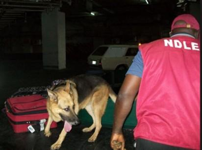 NDLEA seizes 3,892kg of hard drugs in Oyo