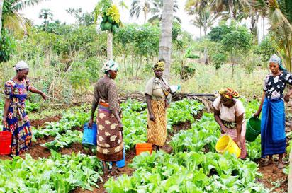 Climate Change: Nigerian women farmers canvass policies to check