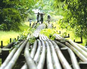 Niger Delta youths
