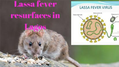 JUST IN: 2 killed as Lassa fever hits Lagos