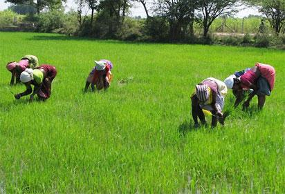 Oyo govt boosts agric, to give farmers unused land