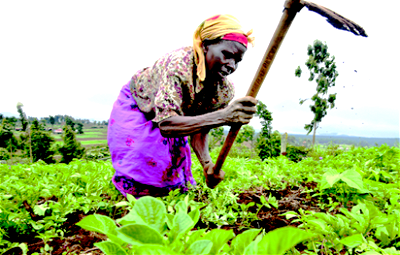 Environmental protection, soil improvement critical to agric devt