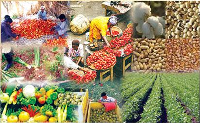 Food Security, Sufficiency: We'll sustain agric interventions-Buhari