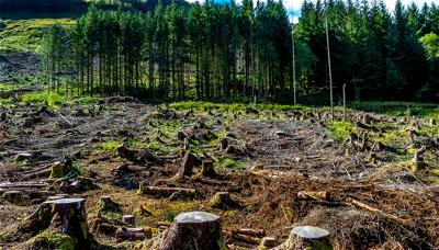 World Earth Day: Nigeria 'll soon run out of natural resources due to pollution, deforestation— Activists