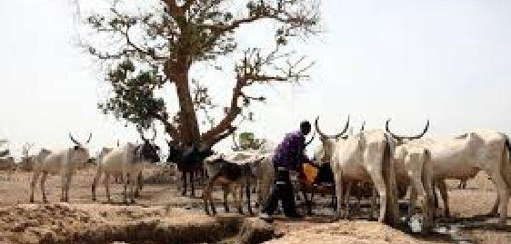 Ethnic, RUGA, Sambisa, Forest, Borno, Sambisa Forest, Borno