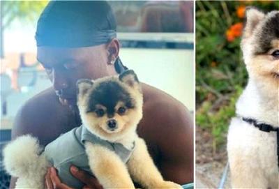 Daniel Sturridge, dog, Nigeria News