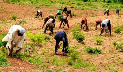 FG seeks collaboration with Agric stakeholders to curb post-harvest losses
