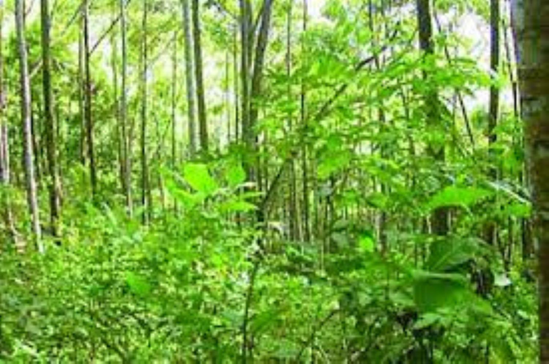 forests, criminals