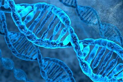 DNA Paternity Testing: The answer