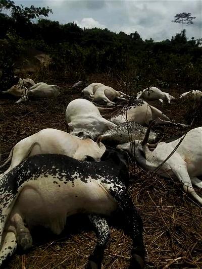 FG raises alarm over outbreak of deadly animal disease in Niger Republic