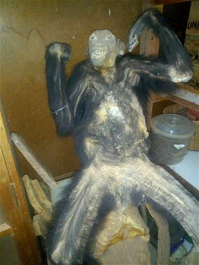UNN Zoology dept. Mourns, embalm only surviving Chimpanzee