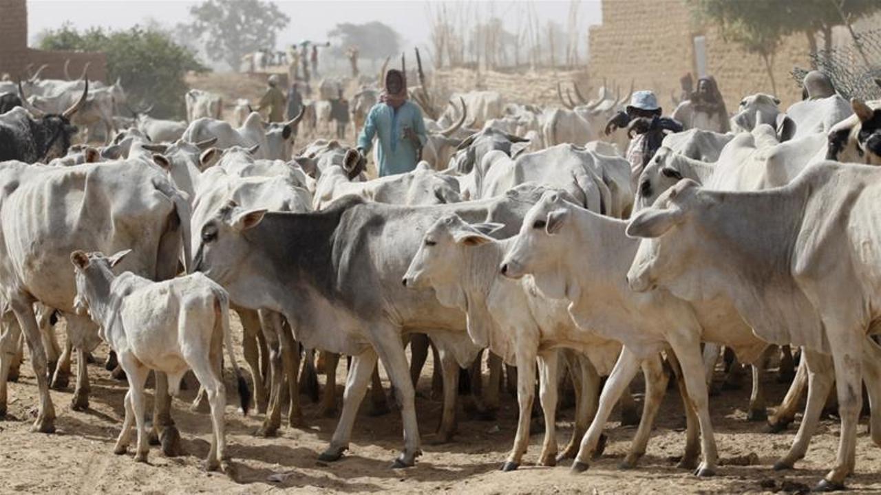 Herdsmen cut off Nasarawa farmer's hands