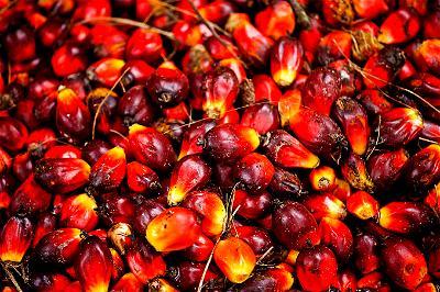 Oil Palm, WTO, Indonesia, EU