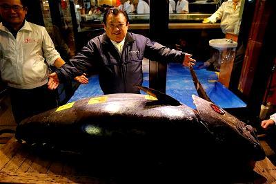 Tuna, Japan