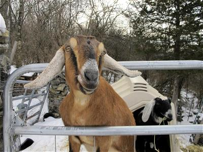 Man hacks neighbour to death over goat theft in Rivers