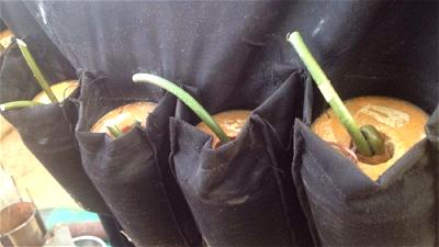 4 die, several others injure as suicide bomber attacks mosque Gwoza