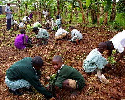 Afforestation, Nigeria, Tree