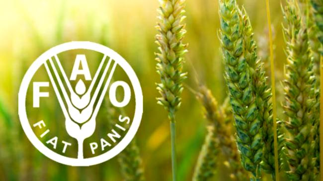 Lagos partners FAO to rehabilitate coconut belt