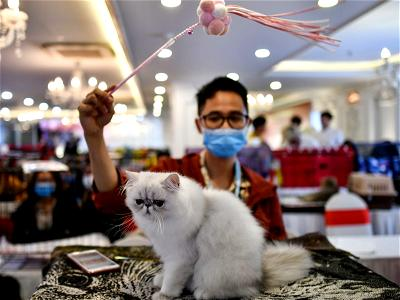Study finds people can transmit coronavirus to cats, dogs