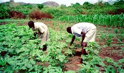 Agribusiness: Farmers insured'll receive payment of claims — NAIC