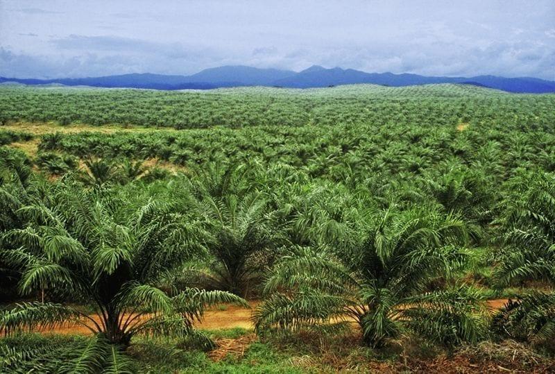 Provide N200 billion for development of oil palm, NPPAN tells CBN