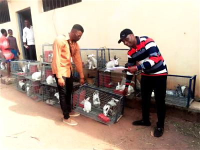 Agribusiness: 100 C'River youths receive 5 rabbits each from NALDA