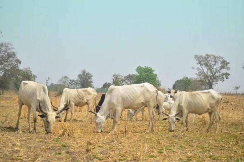 grazing route