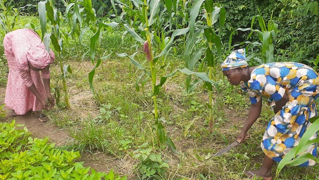 We're not safe again, Oyo female farmers cry out over rape of aged women by herdsmen