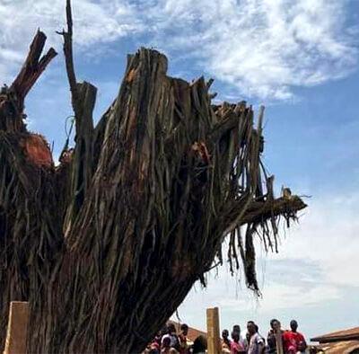 Oyo tree that fell, killed 4, 'rises'